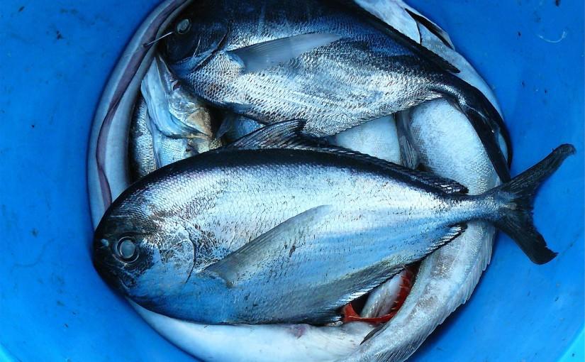 Conservar el pescado