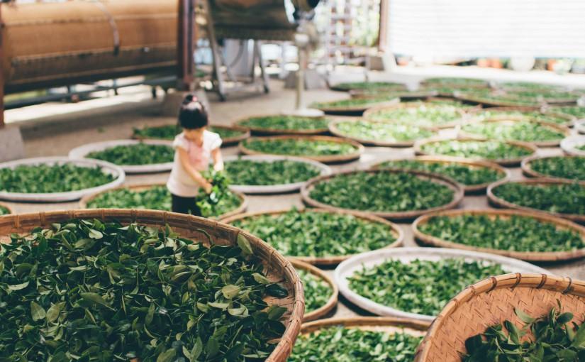 El té y la vida en Japón