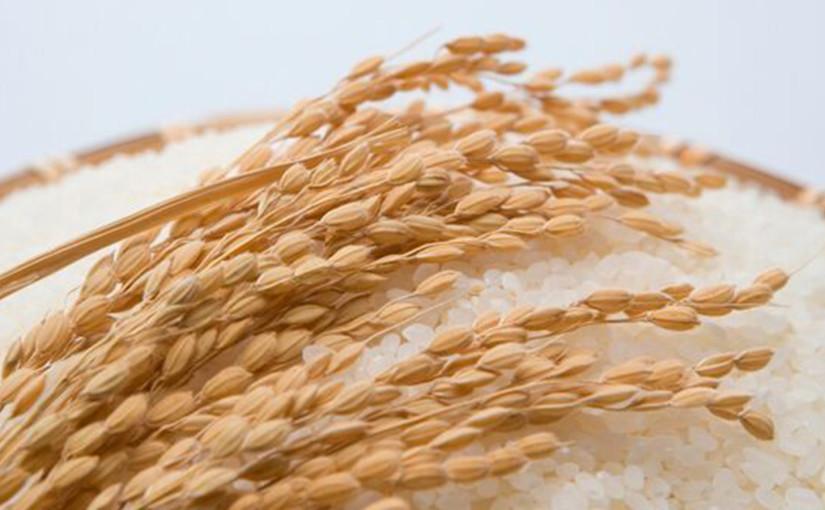El arroz, elemento básico de la cocina japonesa